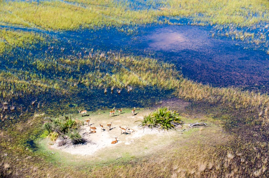 Botswana, Okavango Delta. Impalas