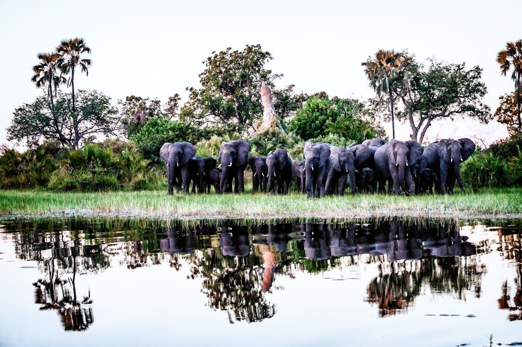 Botswana, Okavango Delta. Elefanten